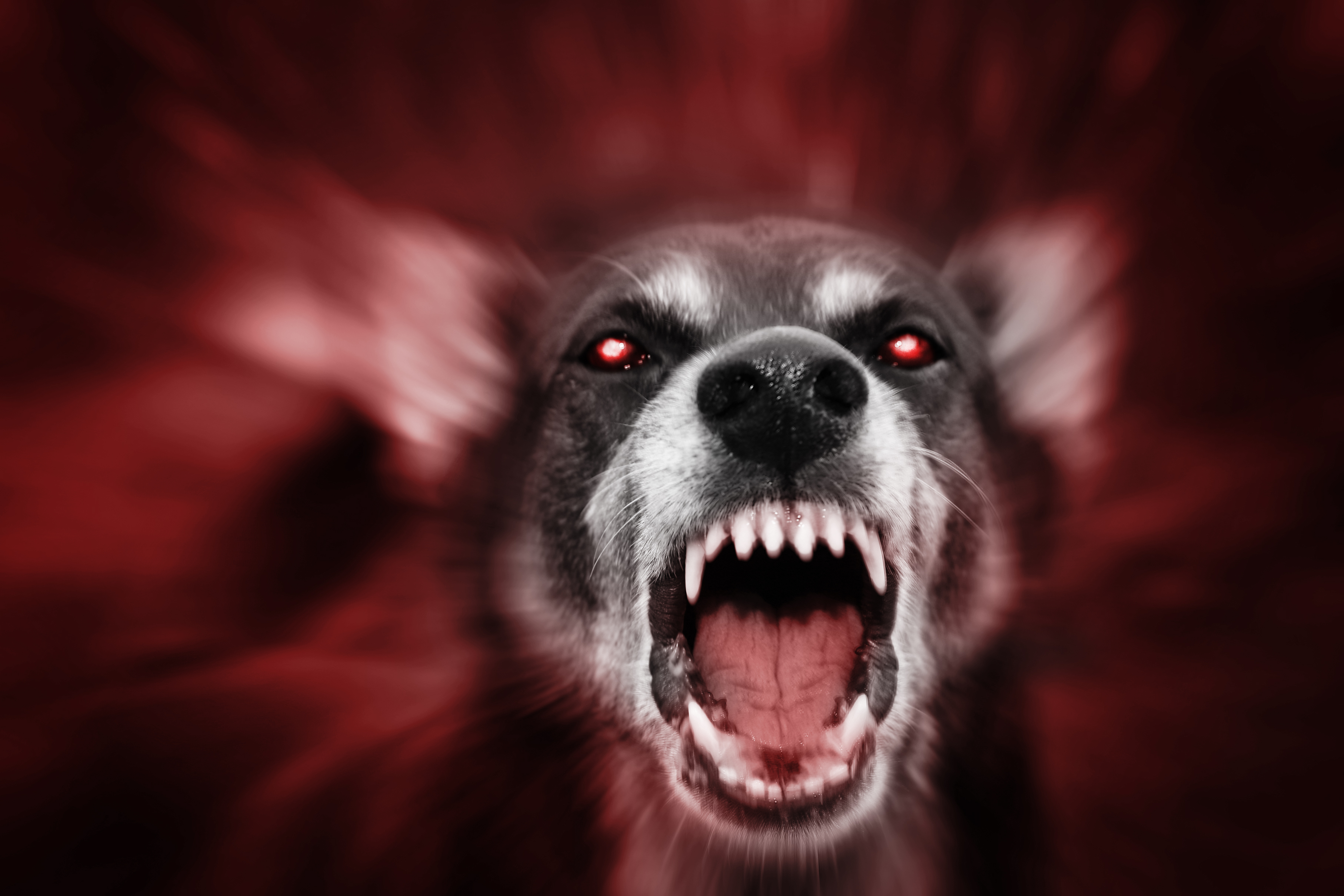Red glowing eyed dog-like aggressive demonic attacking beast, incarnation of evil, fear and hereafter.